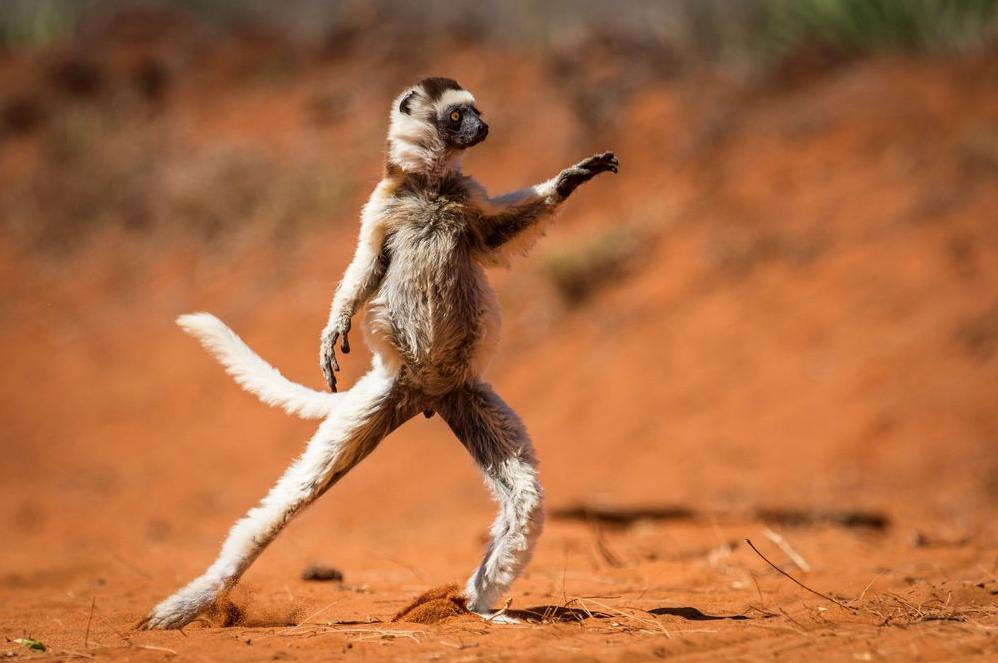 Это нереально! 50 лучших фото National Geographic 2015 года