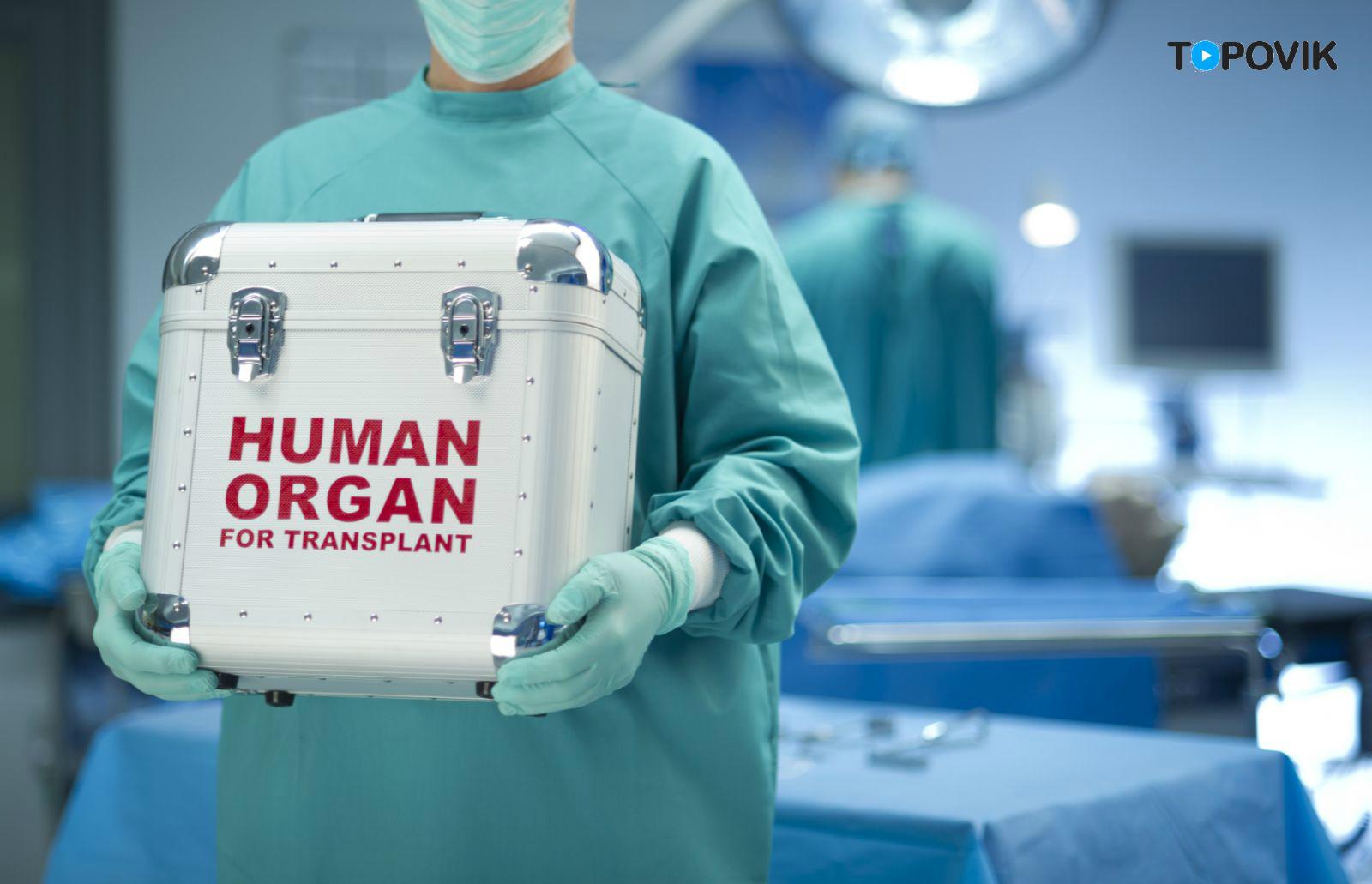 Сколько стоит человек. Цены на человеческие органы