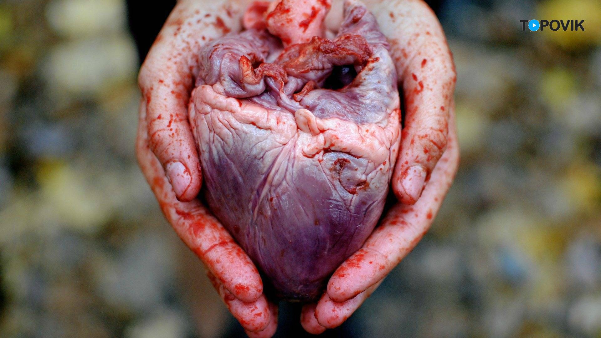 сердце картинка человека