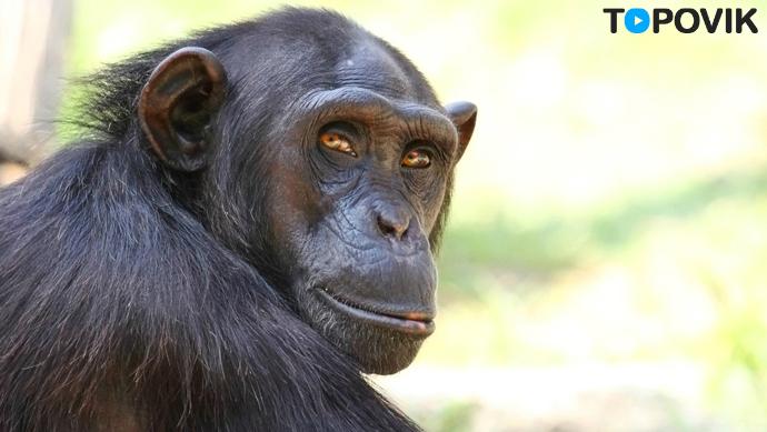 ТОП 5 самых богатых животных в мире!