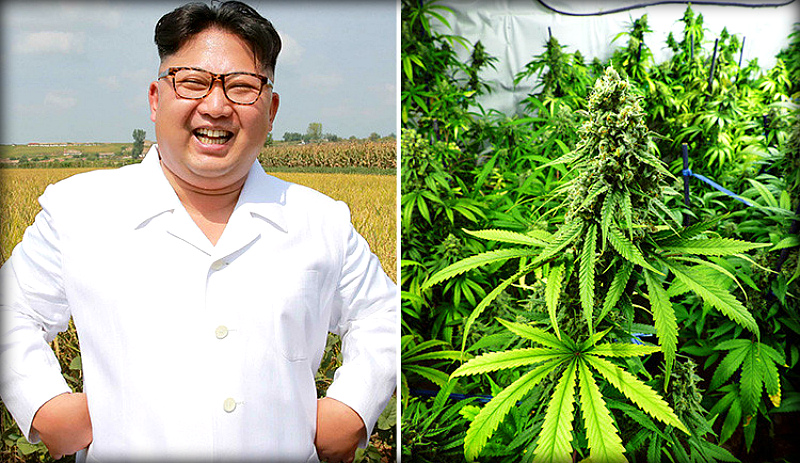 Легализация марихуаны в корее марихуана разрешена в америке