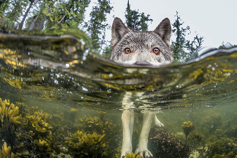 best-photo-national-Geographic