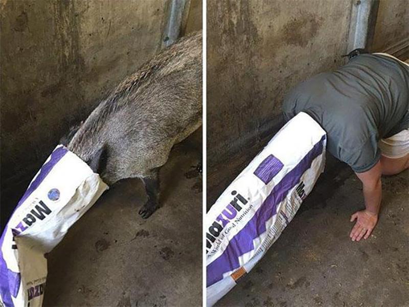 Когда работникам зоопарка становится скучно