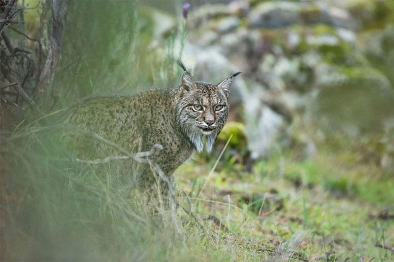 Финалисты конкурса Wildlife Photographer of the Year 2017