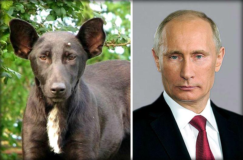 Животные, которые очень похожи на знаменитостей (18 фото)