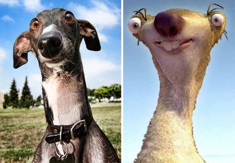 Собаки-двойники, они скоро захватят мир