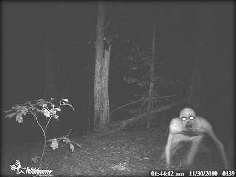 Эти жуткие снимки сделаны охотничьими камерами ночного видения (13 фото)