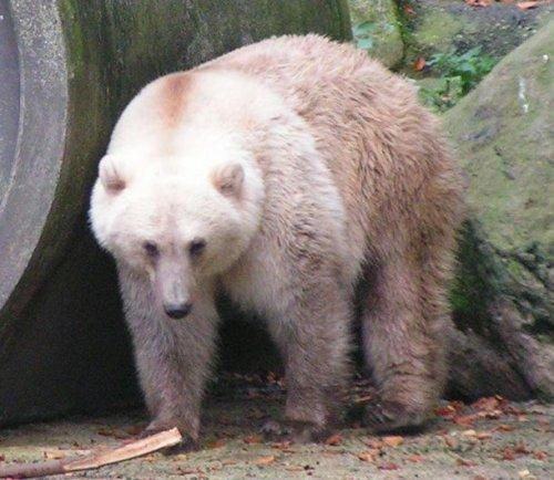 Тайны природы: уникальные животные, в которых невозможно поверить