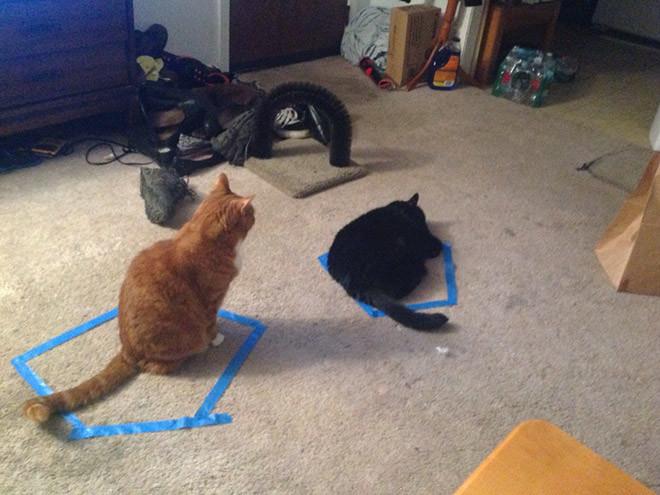 Лайфхак с котом: как заставить кота быть фокусником