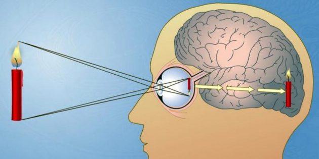 Трюки нашего мозга