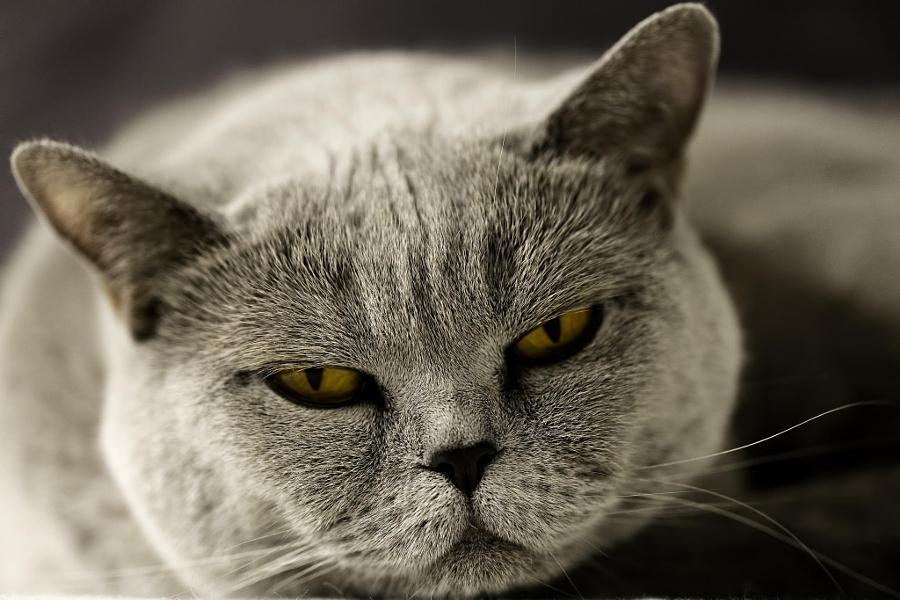 """Фотопроект домашних животных под названием """"Я обиделся"""""""