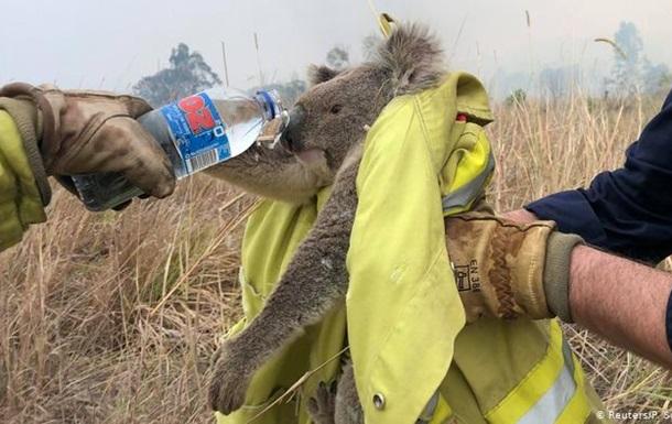 Лесные пожары в Австралии: как знаменитости спасают зеленый континент